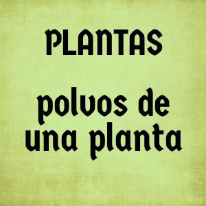 POLVO * una planta